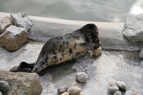 Seal Pose