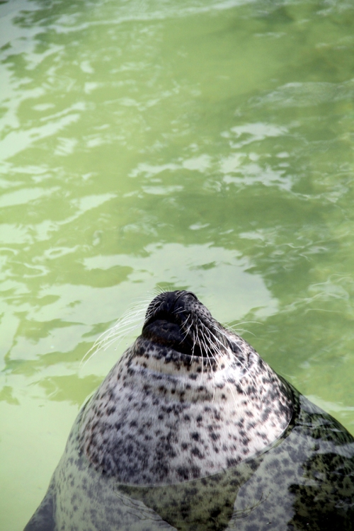 Upward Seal